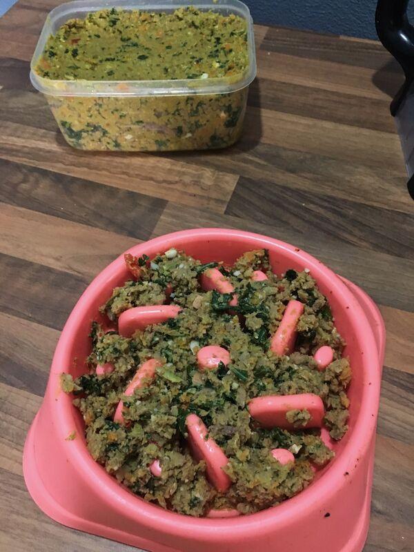 Dog food in a dog bowl